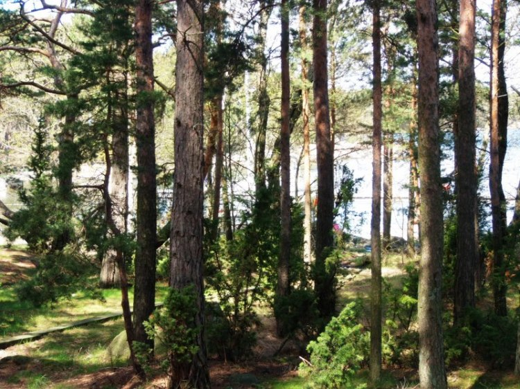 Metsän tapaista