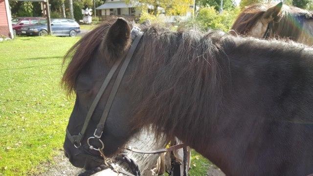 Ronja, my speedy horse