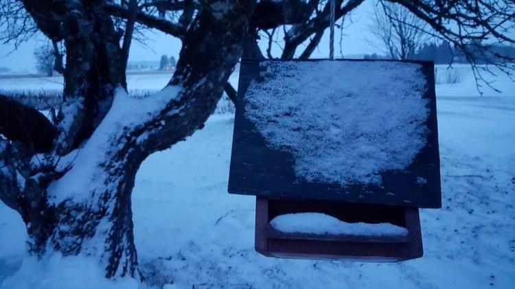 Sininen talviaamun hetki Loimi-joen varrelta