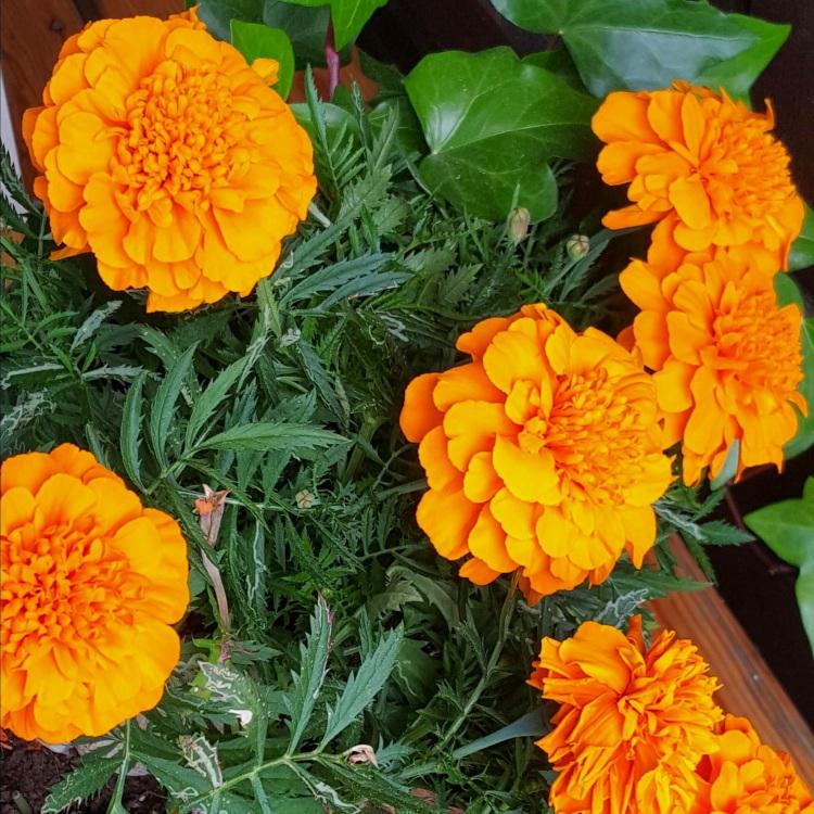 Tänä kesänä olen suosinut oranssia väriä.